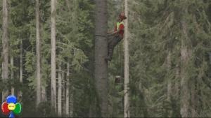 alberi-che-camminano-erri-de-luca